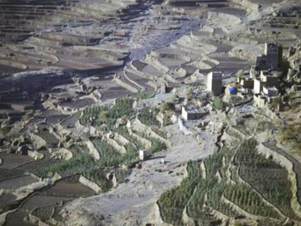 اليمن..جمعية نسائية للبن تنافس إقليمياً