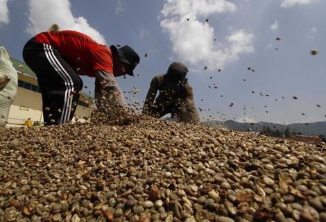 القهوة بدلاً من الحرب: حملات لإنعاش مبيعات البن اليمني