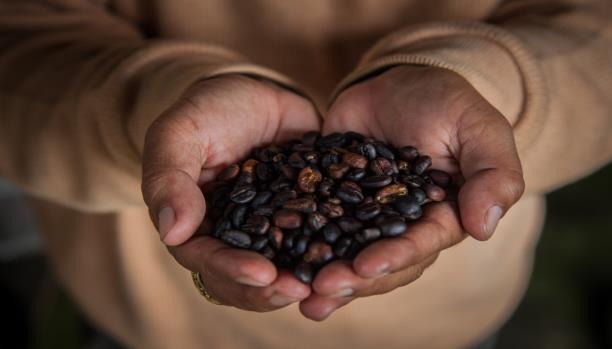 بلاد البن تغيب عن المعرض الدولي للقهوة