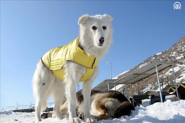 رويترز: بريطاني يتمكن من توليد الطاقة من فضلات الكلاب!.. فيديو