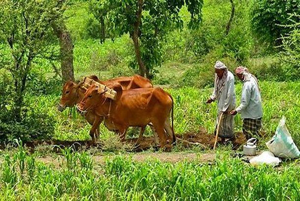توزيع 200 طن من الاعلاف المركزة للمزارعين في لحج وأبين
