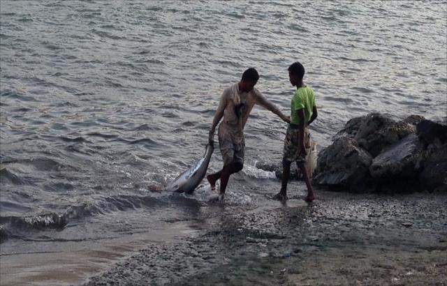 إريتريا تفرج عن 37 صياداً يمنياً.. وتحتجز آخرين
