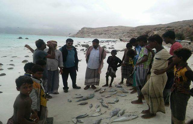 تزايد ظاهرة نفوق الأسماك في شواطئ سقطرى