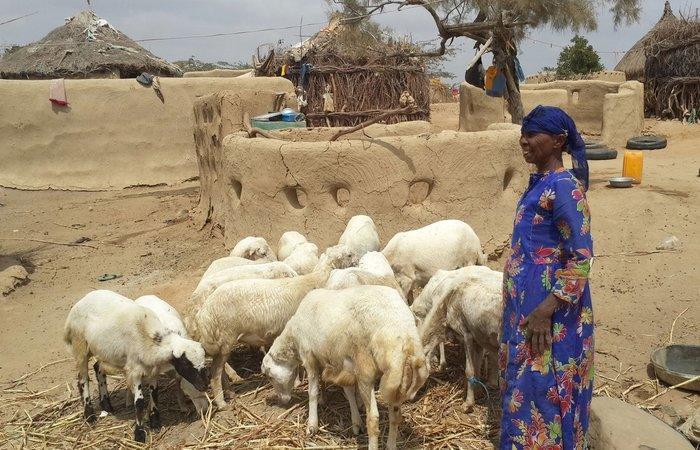 الفاو والبنك الدولي ينفذان مشروعا ليمنيين يعانون انعدام الأمن الغذائي