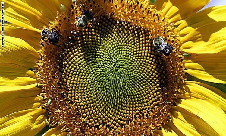 تعرف على العسل الخارق الذي يعالج العديد من الأمراض