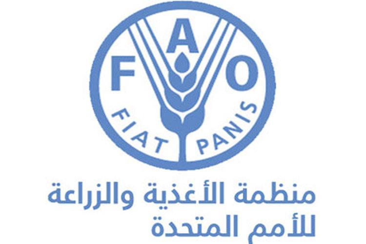 الفاو تستعد لتحصين 8.5 مليون رأس غنم في اليمن