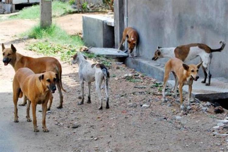 المحويت: 279 حالة إصابة بداء الكلب خلال العام الجاري