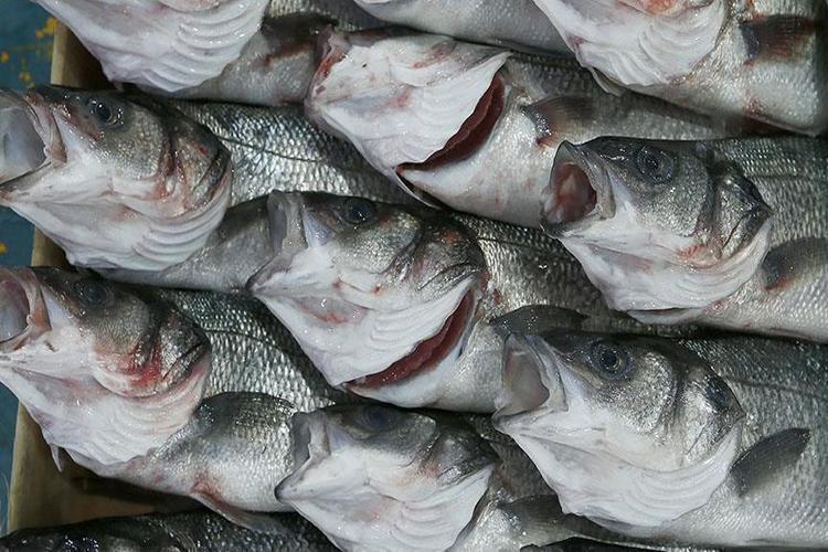 دراسة: تناول الأسماك خلال الحمل يعزز نمو الدماغ لدى الأطفال