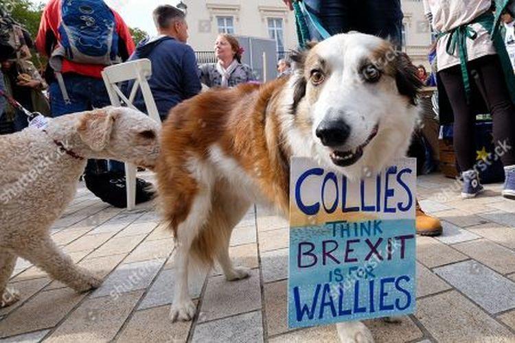 بالفيديو والصور.. مسيرة كلاب في لندن تطالب بريطانيا البقاء في الاتحاد الأوروبي