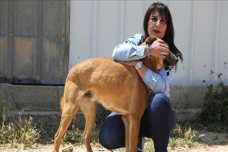 الكلاب تساعد في اكتشاف مرض الملاريا