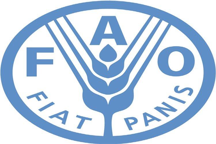 منظمة: أسعار الغذاء العالمية تنخفض لأدنى مستوى في أكثر من عامين