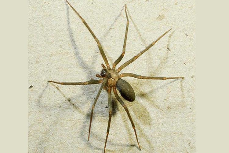 اكتشاف عناكب تغذّي صغارها بالرضاعة في الصين