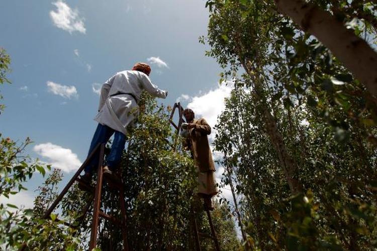 أسمدة ومبيدات زراعية مهربة تهدّد حياة اليمنيين