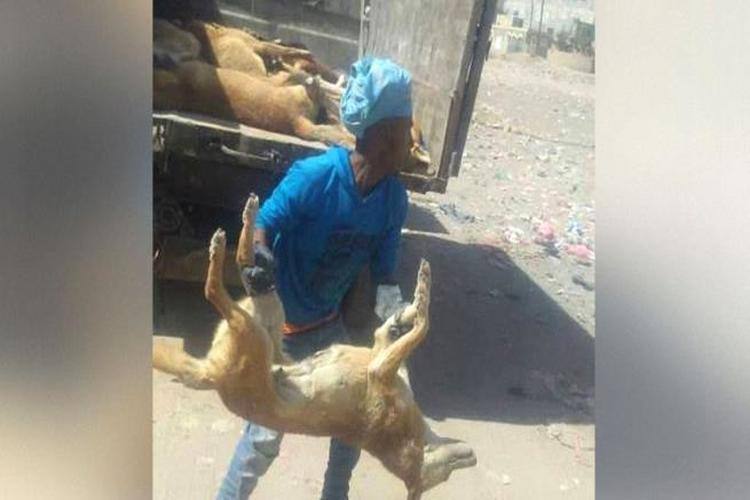 حملة للقضاء على الكلاب الضالة في صنعاء