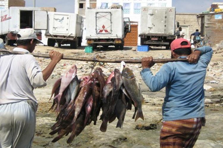 وزارة الثروة السمكية في اليمن تمنع تصدير 3 أنواع من الأسماك