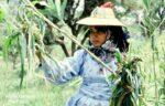امرأة يمنية في الريف